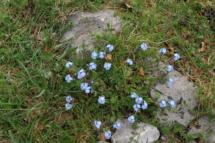 cucco_fiori