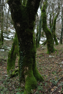trabaria_alberi